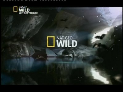 Nat Geo Wild France (Azerspace-1 - 46.0°E)